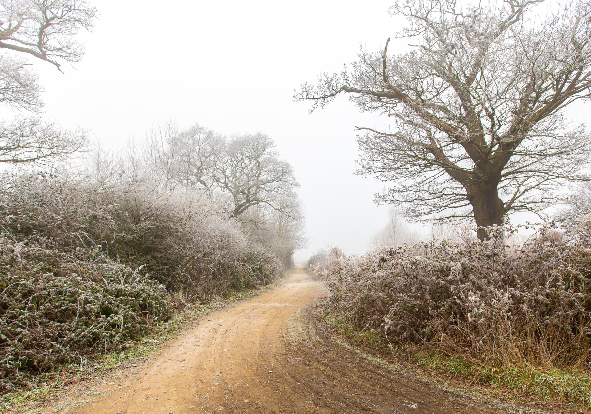 Sandy path winding through frosted trees on a foggy morning at Belhus Woods