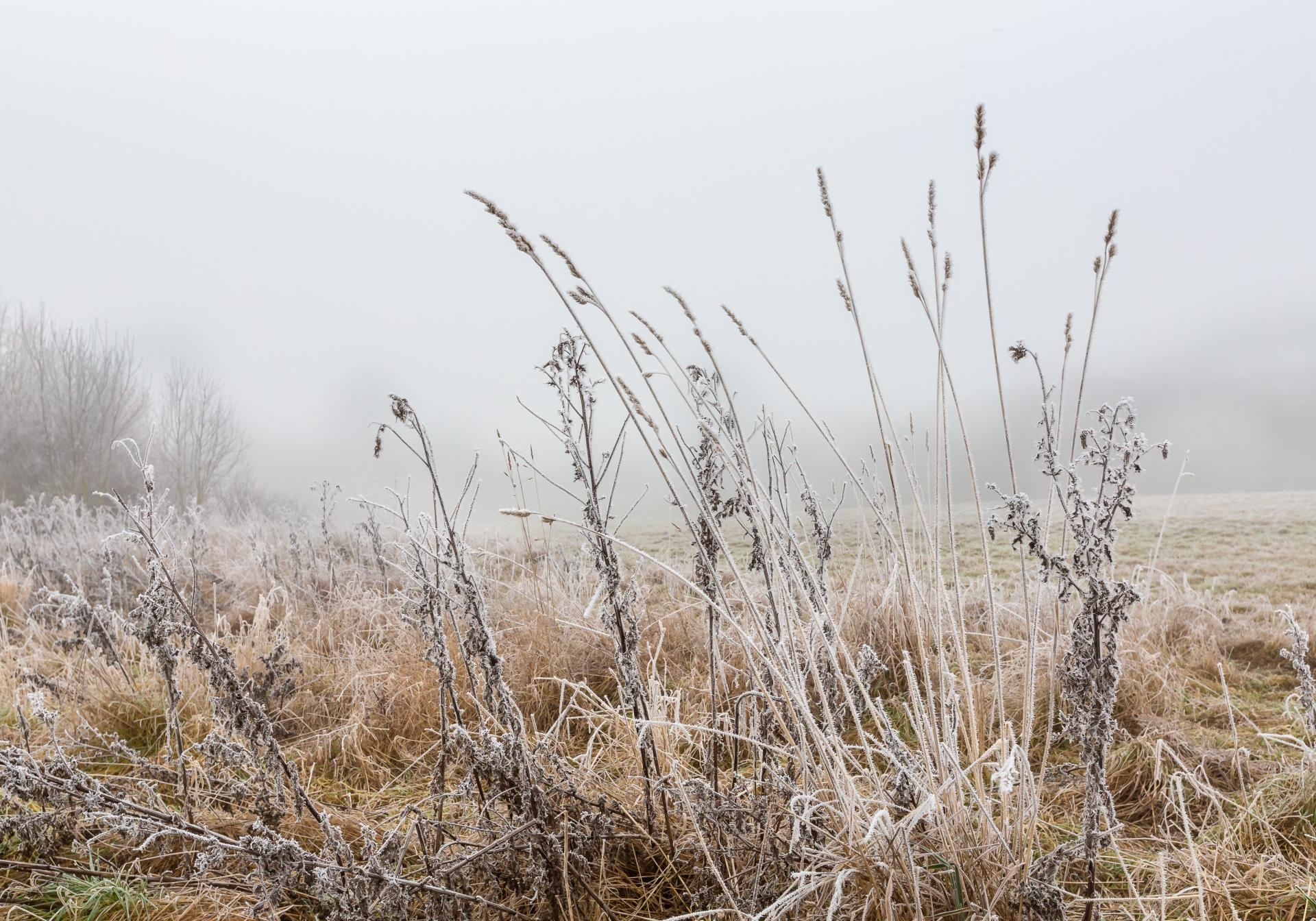 Frosted foliage in winter at woods in Essex